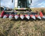 zbior-kukurydzy-na-ziarno-5