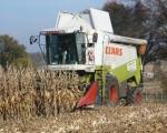 zbior-kukurydzy-na-ziarno